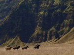 Four Horse with a Man at Mt.Bromo